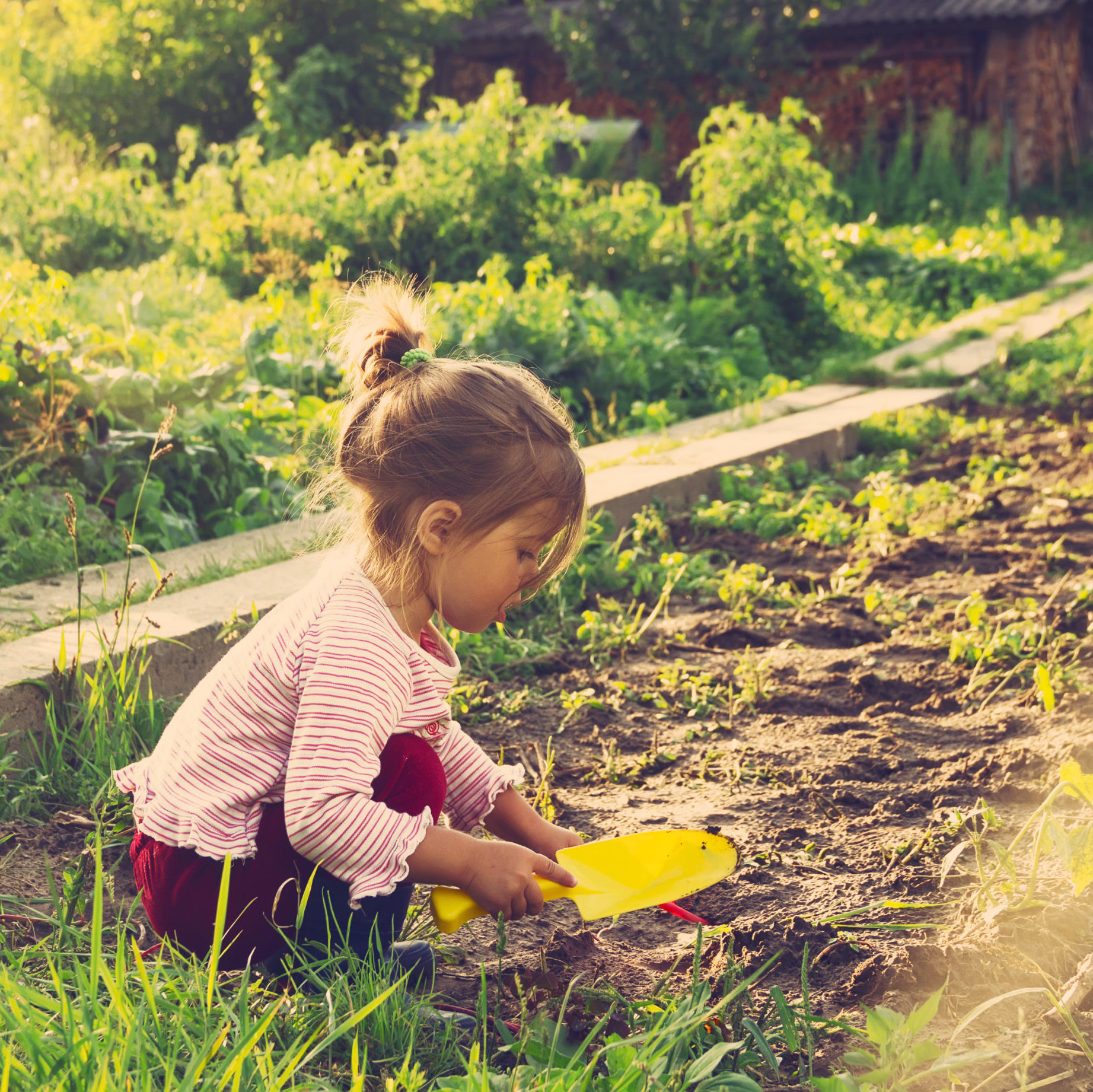 girl picking carrots in autumn